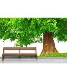 Dreaming Tree 1