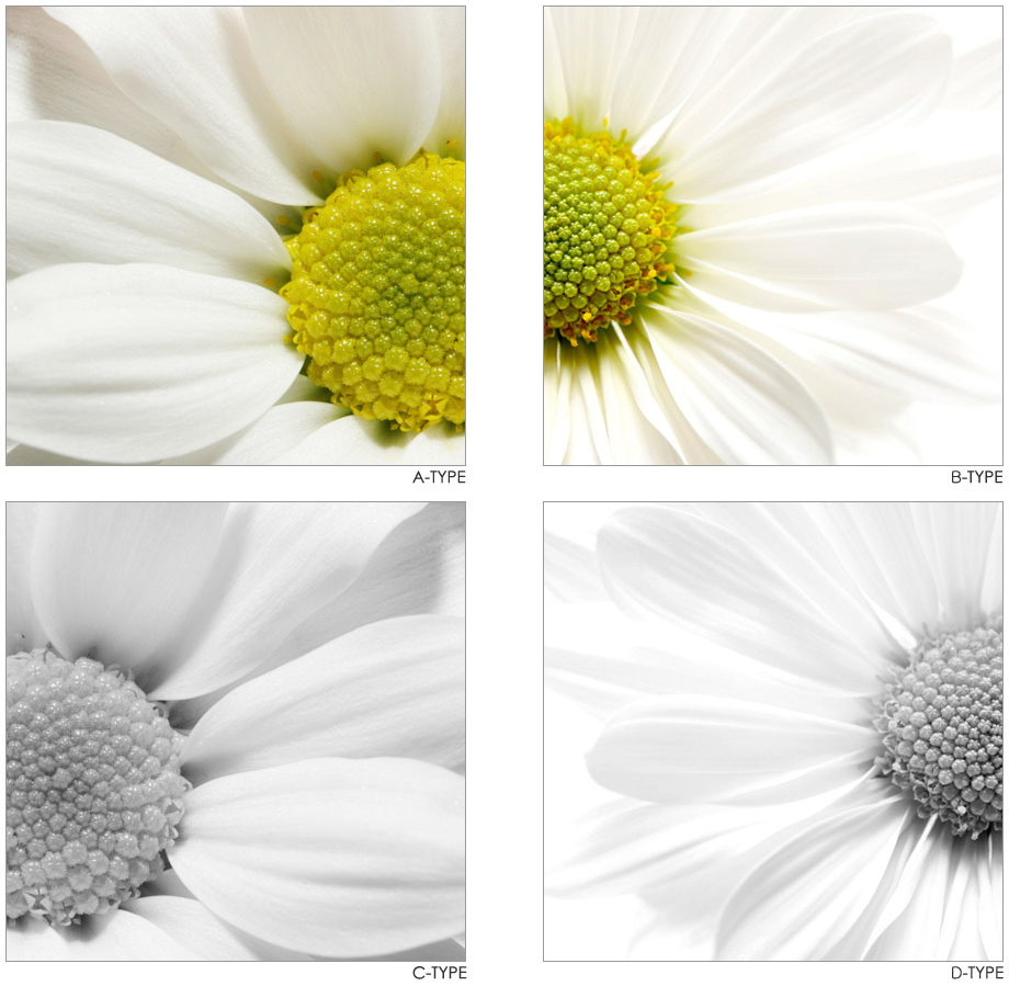 Daisy Art 6